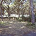 Residence Il Giaguaro - Pineta